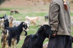 Nómada con una cabra en las montañas de Zagros foto de archivo libre de regalías