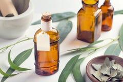 nödvändig eucalyptusolja Glasflaska för eukalyptusolja med etiketten Åtlöje upp royaltyfri bild