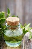 Nödvändig olja för Myrtus (myrten) arkivfoton