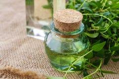 Nödvändig olja för Myrtus (myrten) arkivfoto