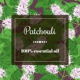 Nödvändig olja för Patchouli Royaltyfri Fotografi