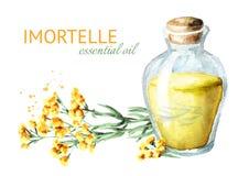 Nödvändig olja för Sandless immortelle Gul blommaHelichrysumarenarium medicinal växt Dragen illustration för vattenfärg hand, iso royaltyfri illustrationer