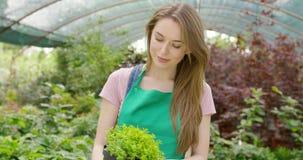Nöjd flicka som rymmer den gröna växten stock video