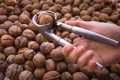 Nötknäppare för valnötter i en kvinnlig hand Arkivbild