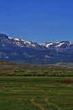 Nötkreatur för högt berg betar framme av Absaroka bergskedja under sommarcirrusmoln och linsformade moln nära Dubois Wyoming Royaltyfri Fotografi