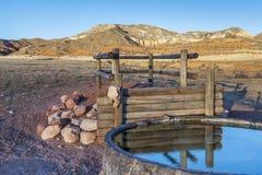 Nötkreatur som bevattnar hålet i Colorado berg Arkivbild