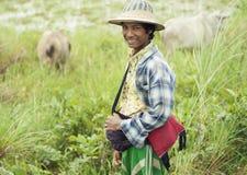 Nötkreaturpojke i Burma Royaltyfri Fotografi