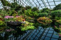 Núblese la bóveda del bosque en el jardín por la bahía Imagen de archivo