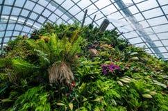 Núblese la bóveda del bosque en el jardín por la bahía Imagen de archivo libre de regalías
