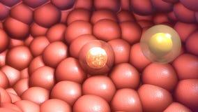 Núcleo de célula fotografía de archivo libre de regalías