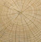 Núcleo de madeira fotografia de stock