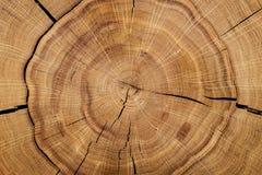 Núcleo do log contra um assoalho de madeira Vista superior closeup Fundo, série da textura fotografia de stock royalty free