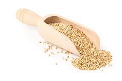 Núcleos crus, naturais, crus da semente do trigo mourisco na colher de madeira Fotos de Stock Royalty Free