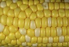 Núcleos de maíz Imágenes de archivo libres de regalías