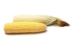 Núcleos de maíz Foto de archivo libre de regalías