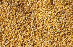 Núcleos de maíz Foto de archivo