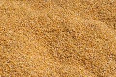 núcleos de milho no escaninho do milho imagens de stock
