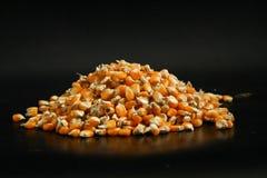Núcleos de milho tailandeses disparados no preto Foto de Stock