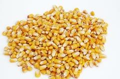 Núcleos del maíz 3 fotos de archivo