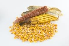 Núcleos del maíz en una pila con la mazorca de maíz foto de archivo