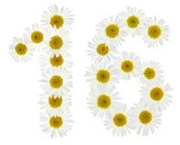Número árabe 16, dieciséis, de las flores blancas de la manzanilla, ISO Foto de archivo libre de regalías
