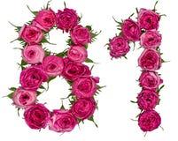 Número árabe 81, ochenta uno, de las flores rojas de la rosa, aislante Fotos de archivo libres de regalías