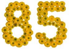 Número árabe 85, ochenta y cinco, de las flores amarillas del ranúnculo Fotos de archivo libres de regalías