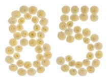 Número árabe 85, ochenta y cinco, de las flores poner crema del chrysanthe Imagen de archivo