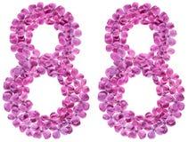 Número árabe 88, ochenta y ocho, de las flores de la lila, aisladas Imágenes de archivo libres de regalías