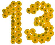 Número árabe 13, trece, de las flores amarillas del ranúnculo, Imagen de archivo libre de regalías