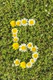 Número cinco dos números da flor Imagens de Stock