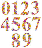 Número da flor isolado Foto de Stock Royalty Free