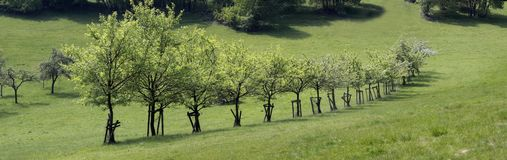 Número de árvores de fruto Imagem de Stock