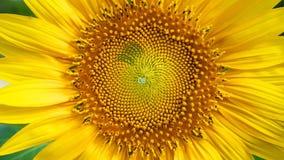 Número de Fibonacci filme