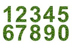 Número de folha verde Imagem de Stock