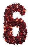 Número 6 de las flores secadas del té del hibisco en un fondo blanco Número para las banderas, anuncios Imagen de archivo libre de regalías
