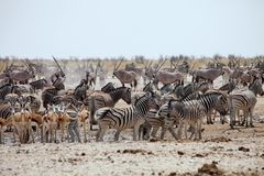 Número enorme de animais no waterhole no Etosha Fotos de Stock