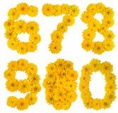 Números da flor Foto de Stock Royalty Free