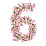 Números 6 de las flores Imágenes de archivo libres de regalías