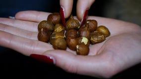 Nüsse, Haselnüsse, Walnüsse in seiner Hand, Haselnuss auf ladone stock footage