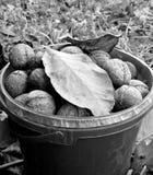 Nüsse im Eimer lizenzfreies stockbild