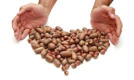 Nüsse sind und zu Händen von Männern Herz-förmig Stockfoto