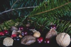 Nüsse und Beeren mit einer neuen geschnittenen Niederlassung weg von einer Weihnachtskiefer tr lizenzfreie stockbilder