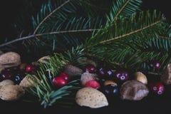 Nüsse und Beeren mit einer neuen geschnittenen Niederlassung weg von einer Weihnachtskiefer tr lizenzfreies stockfoto