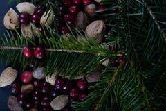 Nüsse und Beeren mit einer neuen geschnittenen Niederlassung weg von einer Weihnachtskiefer tr stockbild