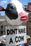 N'ayez pas un défilé végétarien de fierté de vache image libre de droits