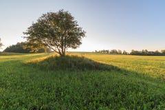 Één boom op het gebied op zonsopgang Stock Foto's