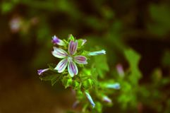 ??n enkele roze bloem royalty-vrije stock afbeelding