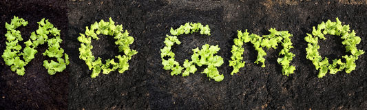 N'exprimez AUCUN GMO photo libre de droits