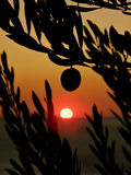 Één fruit van olijfbomen in zonsondergang Royalty-vrije Stock Afbeelding